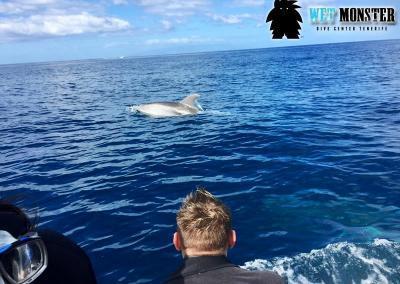delfiny-teneryfa-nurkowanie