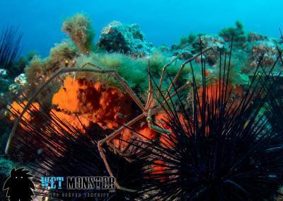 nurkowanie Teneryfa Cueva de los Cerebros