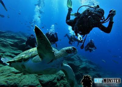 nurkowanie-z-zolwiami-teneryfa-1