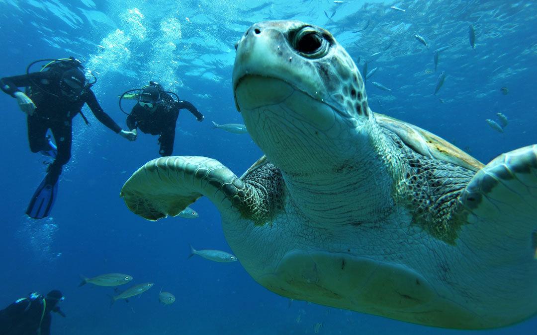 nurkowanie żółwie płaszczki Teneryfa