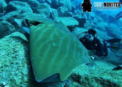 plaszczki-nurkowanie-teneryfa