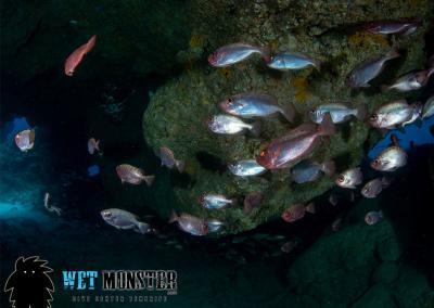 Shark Cave nurkowanie na Teneryfie