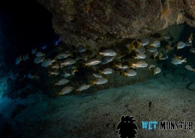 Shark Cave nurkowanie Teneryfa