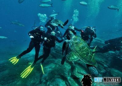 Nurkowanie z żółwiami Teneryfa