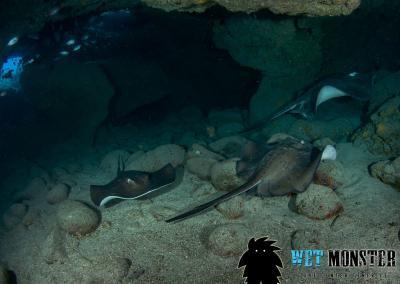 Teneryfa nurkownie Shark Cave