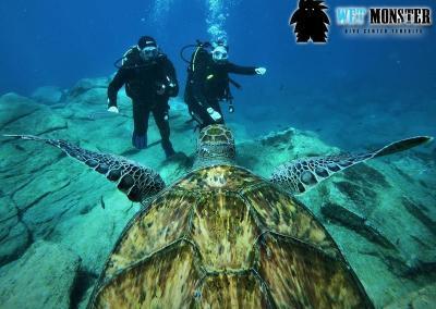 Żółwie nurkowanie na Teneryfie